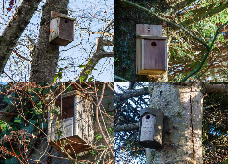Bird Boxes at the Flower Farm Copyright Ken Leslie Photography