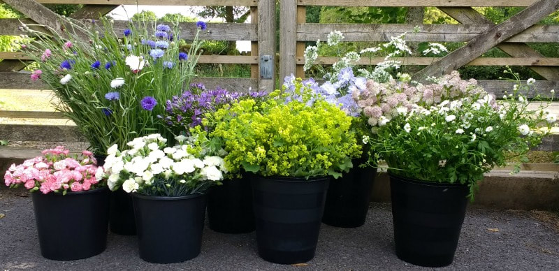 'Bloom Buckets' of flowers ready for collection for a DIY wedding in Scotland