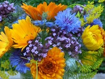 Small posy of bright summer flowers grown & arranged by castle douglas florist Galloway Flowers