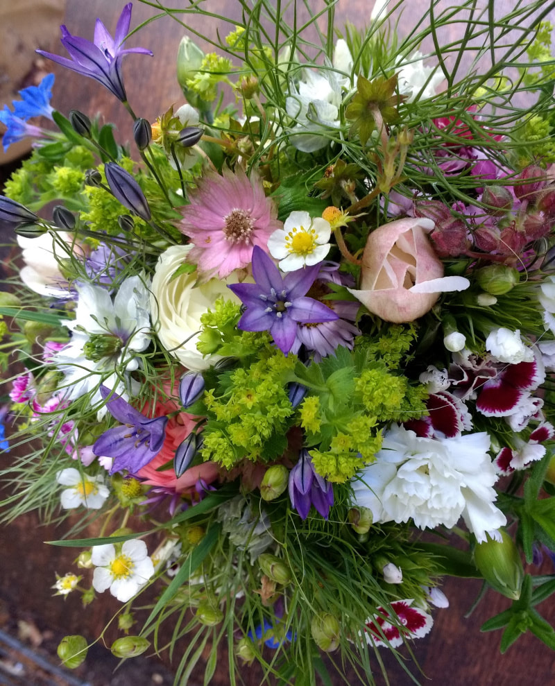 June Posy of locally grown flowers, Dumfries & Galloway Scotland. copyright www.GallowayFlowers.co.uk